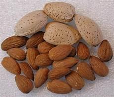 alimenti contengono lisina quali alimenti contengono triptofano metionina tirosina