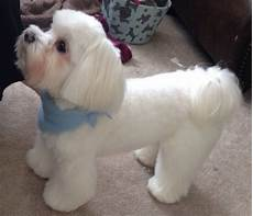 488 best dog grooming looks styles images pinterest dog grooming styles pets and