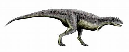 Animal A Day Carnotaurus
