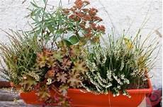 fiori invernali per balconi piante perenni per fioriere esterne