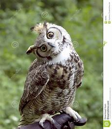 huh owl stock image image of questioning bird talons