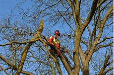 Baumpflege Baumpfleger