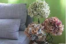 deko mit getrockneten hortensien getrocknete hortensien mit spr 252 hlack wieder farblichen