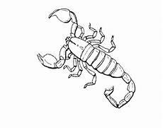 Malvorlagen Insekten N De 16 Ausmalbilder Insekten