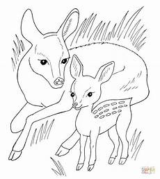 roe deers coloring page free printable coloring pages