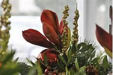 amaryllis giftig für katzen pflanzengefahren herbst winter