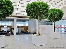 Ficus Nitida Gro 223 En Baum Innenraum Kaufen