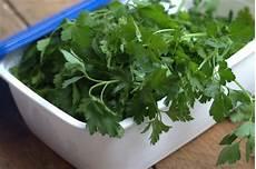 conserver herbes aromatiques comment conserver les herbes aromatiques persil