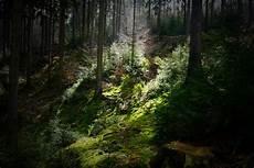 elfenwald foto bild nature forst wald bilder auf