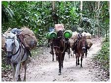 Donkey  Wikipedia