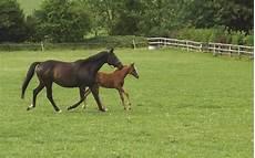 lettre chevaux 2016 equi p 226 ture n 176 8 entretien des p 226 tures conseil des chevaux de normandie