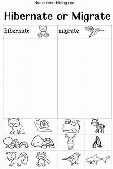 winter animals coloring pages for preschool 17197 winter animals for preschool activities living