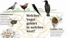 welcher vogel baut welches nest welcher vogel geh 246 rt in welches nest kinderpost