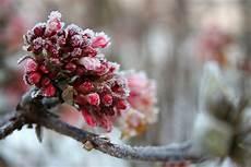 winterbl 252 hende pflanzen richtig pflegen ǀ husmann