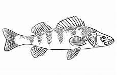Ausmalbilder Erwachsene Fische 19 New Ausmalbilder Erwachsene Fische