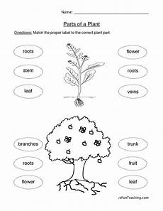 free printable worksheets on plants for grade 3 13687 plant parts worksheet teaching