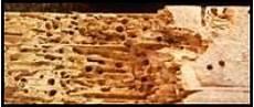 traitement du bois contre les vrillettes valais vaud suisse