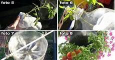 come seminare i pomodori in vaso come piantare i pomodori in bottiglie di plastica