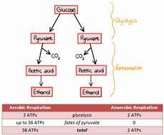 2 7 cell respiration a biology
