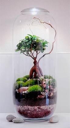 Comment Faire Un Terrarium Humide En 8 233 D 233 Tente Jardin