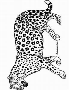 ausmalbild tiere panther ausmalbilder1001 de