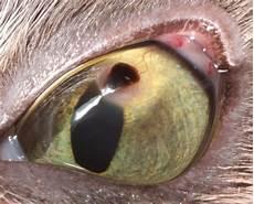 tumeur derrière l oeil principales affections oculaires vision animale