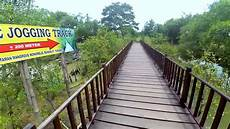 Gambar Wisata Hutan Mangrove Surabaya