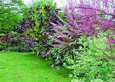 haie de jardin pousse rapide recherche jardin