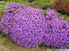 plantes vivaces pour talus les plantes couvre sol