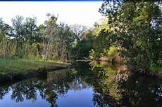 pond wikipedia