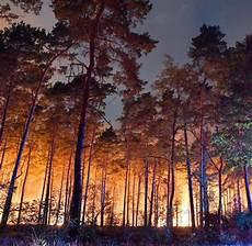 Waldbrand Bei Berlin - nach dem waldbrand was feuer f 252 r die natur bedeutet welt