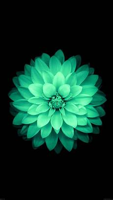 green flower iphone wallpaper hd tap and get the free app nature flowers mint beautiful