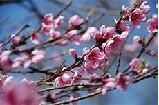 piante di fiori tag i le tre line