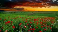nature flower desktop wallpaper hd nature wallpapers 1080p desktop in green landscape