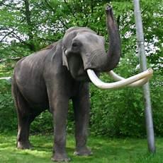 Malvorlage Indischer Elefant Indischer Elefant Medienwerkstatt Wissen 169 2006 2017