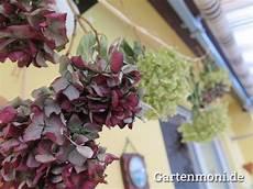 deko mit getrockneten hortensien hortensien getrocknet 2 gartenmoni altes wissen bewahren