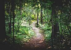 Gambar Pohon Alam Jalan Gurun Cabang Jalur Jejak