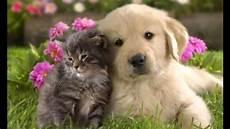 Malvorlagen Hundebabys Kostenlos Bilder Hundebabys Vorlagen Zum Ausmalen Gratis