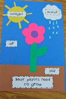 mrs s pre k crew rocks plants preschool parts of a plant preschool science
