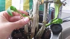 orchideenableger einpflanzen anleitung