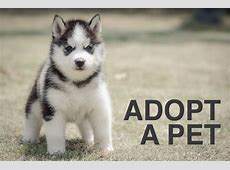 Animal Shelter Near Me,ARE Animal Rescue in Hemet, California,Rescue dogs for adoption|2020-11-30