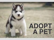 animal shelter near me list