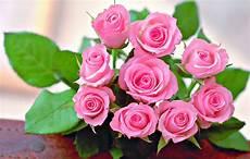 6 Gambar Bunga Mawar Cantik Cocok Untuk Wallpaper Gambar
