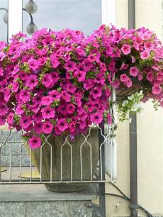 Images Gratuites Fleur Balcon Hortensia