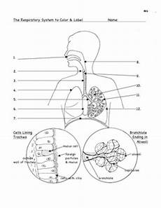 science worksheets respiratory system 12369 respiration the respirator by bluebird teaching materials teachers pay teachers