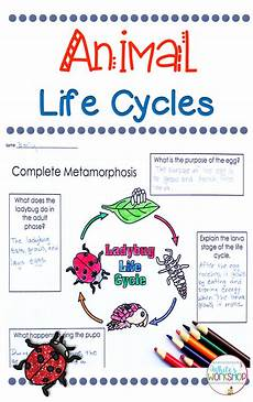 animal cycle worksheets 13938 animal cycles unit cycles complete incomplete metamorphosis
