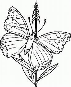 Malvorlagen Schmetterling Selber Machen Schmetterling Malvorlagen Malvorlagen1001 De