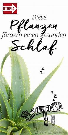 schlafzimmer pflanzen gesund 4 zimmerpflanzen die gesunden schlaf f 246 rdern