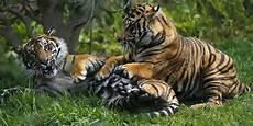 Hutan Beralih Fungsi Harimau Jawa Di Lebak Semakin Punah