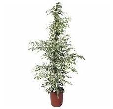 Welche Pflanze Produziert Am Meisten Sauerstoff - luftreinigende pflanzen hornbach